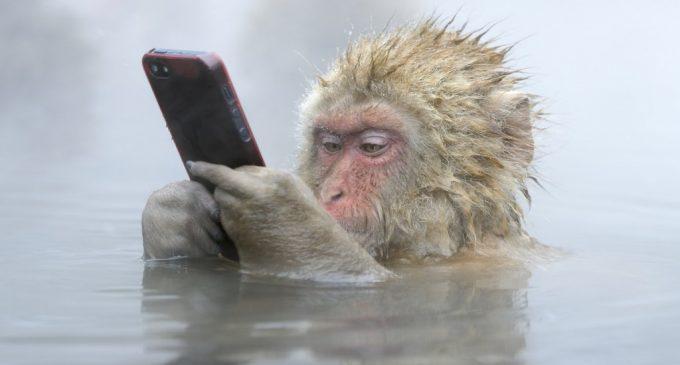 Công nghệ buồn trong năm Con Khỉ