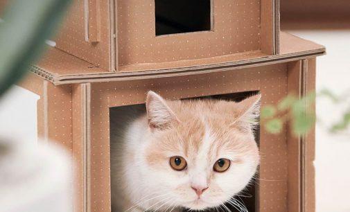 """Samsung Vina tổ chức cuộc thi """"Làm nhà thú cưng"""" từ bao bì sinh thái"""